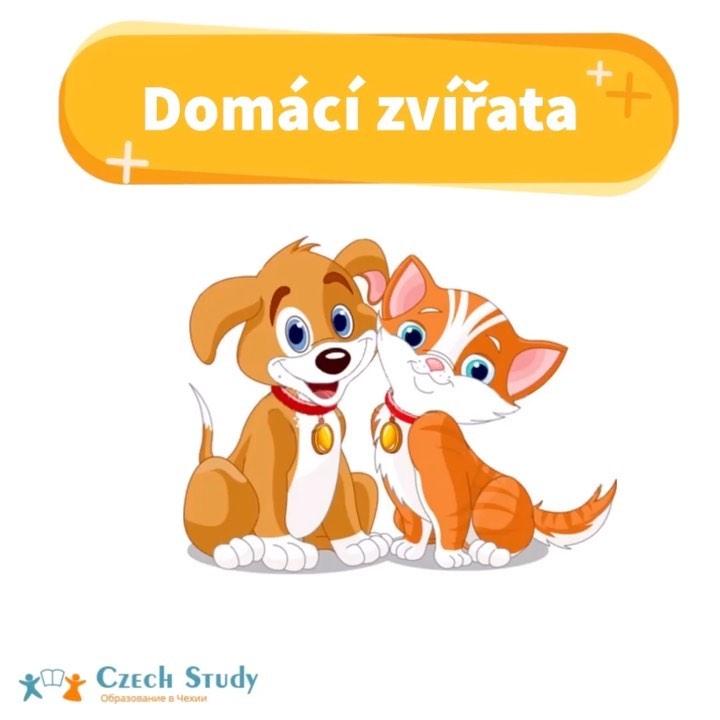Domácí zvířata ⠀ Сегодня у нас будет самая милая #slovní_banka🤗 ⠀ Потому-что мы поговорим о домашних животных ⠀ Domácí zvířata-[Домаци звиржата]-домашние животные: ⠀ kocour-[коцоур]-кот; ⠀ pes-[пэс]-пёс; ⠀ křeček-[кржечэк]-хомячок; ⠀ morče-[морче]-морская свинка; ⠀ kráva-[крава]-корова; ⠀ býk-[бик]-бык; ⠀ beran-[бэран]-баран; ⠀ ovce-[овцэ]-овца; ⠀ koza-[коза]-коза; ⠀ kozel-[козэл]-козел; ⠀ kůň-[кунь]-конь; ⠀ králík-[кралик]-кролик; ⠀ myš-[мыш]-мышь; ⠀ krysa-[крыса]-крыса; ⠀ fretka-[фретка]-домашний хорек. ⠀ Ptáci-[птаци]-птицы: ⠀ Papoušek-[папоушек]-попугай; ⠀ Slepice-[слэпице]-курица; ⠀ Kohout-[кохоут]-петух. ⠀ Рассказывайте, кто живет у вас в доме?)